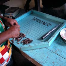 performing a cut test on cocoa beans